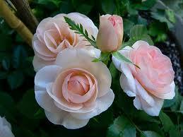 20130505172009-flores-6.jpg
