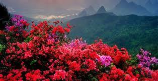 20130721235600-flores-.jpg