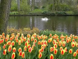 20130928172226-tulipanes.jpg