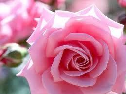 20140526132823-rosas.jpg